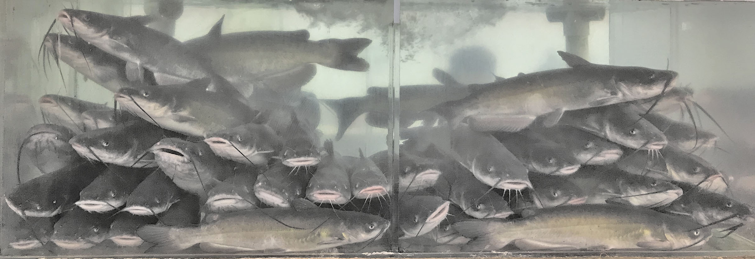 About The Farm – Imperial Catfish Farm
